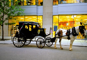 horse and carriage accident